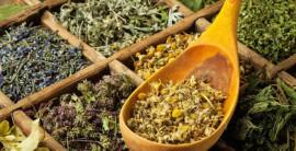 Какие лечебные травяные сборы существуют?