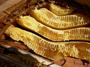 Бортневый мед